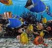 3D Fish School Screensaver 4.91 - beautiful wallpaper for PC